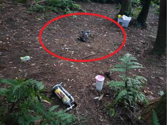 陽明山拍戲遭虎頭蜂群攻擊13傷 竟是在國家公園生火燻到蜂巢