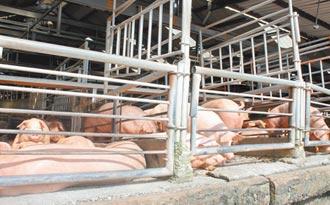 彰縣畜牧糞尿資源化 幾無業者達標