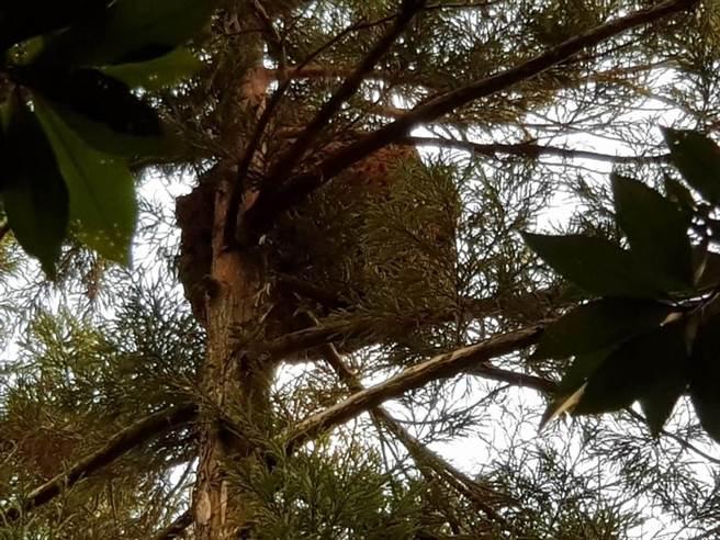 達騰娛樂公司拍攝網路劇在竹子湖黑森林生火引發虎頭蜂攻擊,造成13名劇組人員受傷。(圖/李文正翻攝)