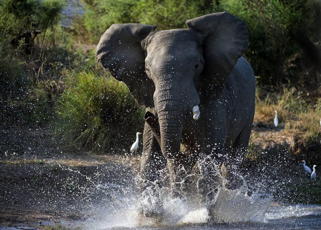 丹麥遊客日前在非洲尚比亞旅遊時,意外拍到母象激戰鱷魚的畫面。(示意圖/達志影像)