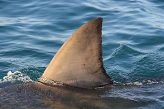 鯊魚狂蹭美腿 比基尼妹差點送命 拍下驚悚瞬間