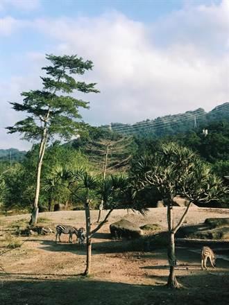 大陸人在台灣》逛逛台北市立動物園