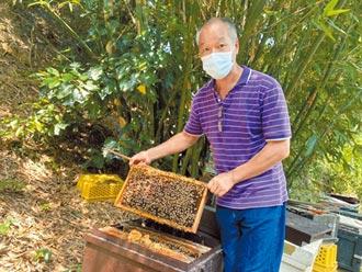 竹縣5噸頭等蜜滯銷 養蜂業者苦撐