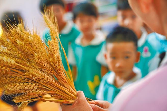 中國河北省邢台市一所幼兒園的老師正在教孩子們學習辨認農作物,幫助他們認識糧食的重要性,從小養成節約糧食,杜絕浪費的習慣。聯合國糧農組織報告稱,全球有三分之一糧食被浪費,中國和美國是浪費糧食的大國。(新華社資料照片)