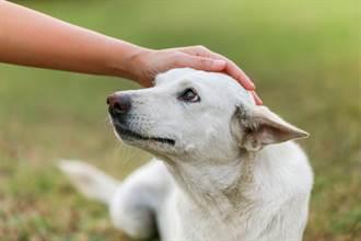 醫學之謎 盲犬跑跳9個月主人才知牠失明 獸醫也沒遇過