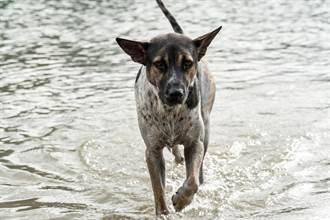 流浪狗無處去 擋路中央淋雨 警沒驅趕還共撐傘暖爆萬人