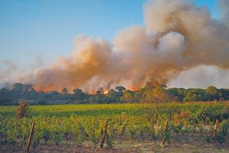 法葡萄酒產區又受創