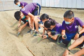 嘉縣遊子返鄉蓋溫室 學童體驗種蘆筍