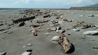 28日起台東海岸地區 開放漂流木自由撿拾