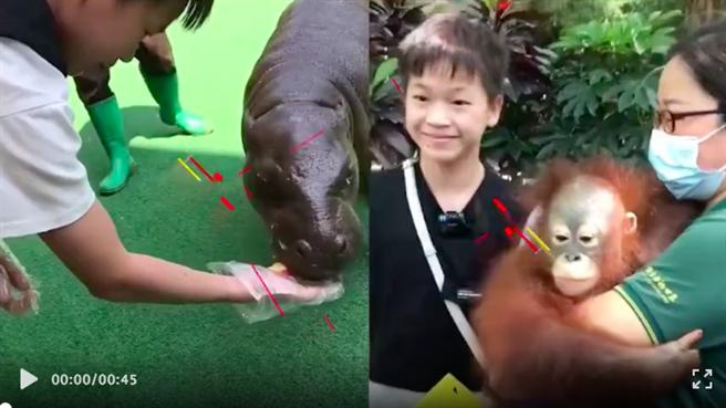大陸14歲跳水小將全紅嬋終於圓夢逛動物園。(翻攝自陳艾森vlog)