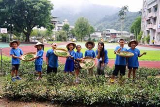 培訓小茶師、護螢植樹 坪林國小獲教育部生命教育特色學校獎