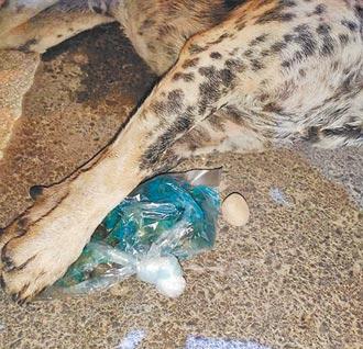 桃園動保園區 半月內4狗被毒死