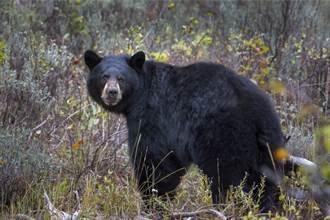 撿到GoPro相機 驚見黑熊自拍片 第一視角融化眾人