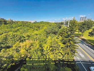 社宅+長照 樹林擬打造複合專區