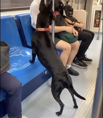 黑狗「跑太快」誤闖北捷文湖線 乘客驚:還會自己下車
