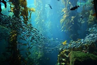 噪音污染正改變海洋植物的細胞 竟讓海草自行連根拔起