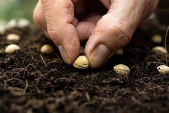 神舟十二號帶回「太空種子」 科學家發現超驚人變異