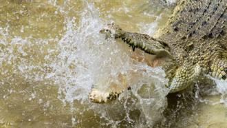 將無人機當獵物 巨鱷躍出水面「抓飛鳥」驚悚瞬間曝