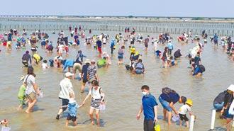 台南七股海鮮節 千人戴口罩挖文蛤