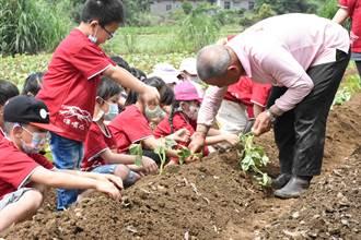 新北大坪國小推食農教育 學生與社區居民一起種地瓜