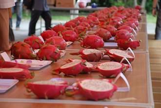 一年一度「全國紅龍果優質果品評鑑會」直播上場