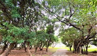 都市綠洲!中市首座百年荔枝公園將化身祕境