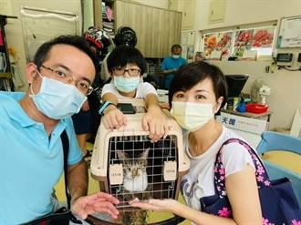 愛滋骨折貓大變身 3個月後人見人愛