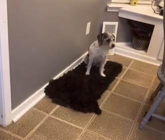 愛犬消失她翻家找1小時 求救白汪驚覺「眼睛業障重」