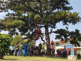 斗南鎮「最美校樹」老黑松重生 師生攀樹慶生