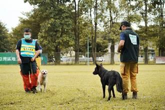 提升搜救犬搜救水準 全國IRO評量認證今登場