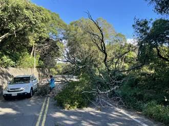 龜山產業道路大樹突倒下 橫躺馬路阻通行