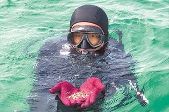 守護海洋 澎湖放流20萬顆嬌ㄚ螺