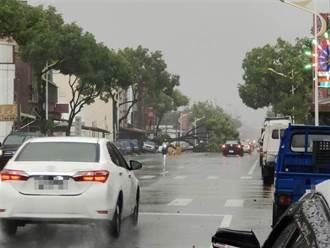 圓規颱風環流襲擊 花蓮268戶大停電 路樹倒塌驚險畫面曝