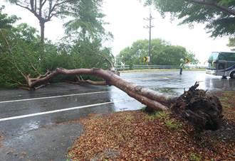 台11線台東東河段路樹倒塌 南迴公路回堵2公里