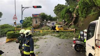 陽明山強風豪雨 計程車送老師進校遭大樹壓毀 司機受傷送醫