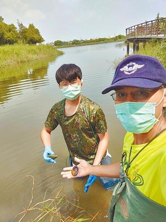 六甲林鳳社區 邀遊客當溼地生態志工
