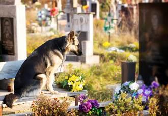 主人媽媽過世4年 愛犬仍不忘溫情 一進墓園秒找到墓碑
