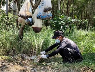 嘉義某樹林驚見8隻死貓掛樹頭 家畜所人員險被臭暈
