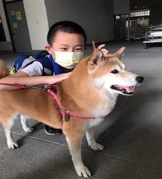 飼主注意!溫和狗狗突變暴怒犬 獸醫師曝1病因:早期難發覺