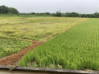 豪雨狂炸花蓮農作損失慘重 農委會針對4作物啟動災害救助