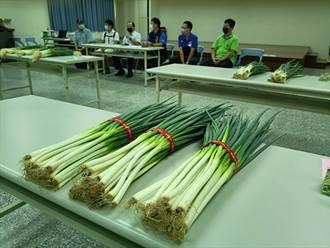 產量較去年銳減3成 台中大安蔥價格漲3倍 每公斤飆至260元