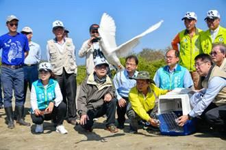 「T85」你在哪? 台南黑面琵鷺保育季邀民眾尋找市長野放的黑面琵鷺
