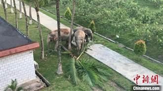 雲南西雙版納邊境管理支隊 月餘29次為亞洲象出任務