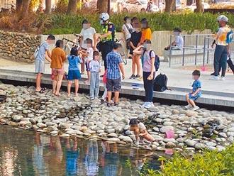 竹市美國螯蝦入侵護城河 影響生態