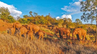 雲南亞洲象回家了 棲地建國家公園