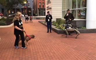 美國陸軍協會展Spot機器狗  嚇到真狗狗