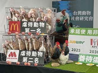動物福利蛋評比出爐 麥當勞成「虐待母雞第一名」