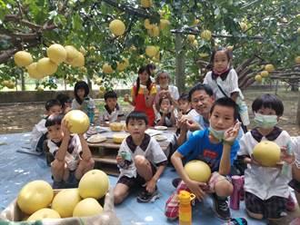 麻豆大白柚盛產 安業學童柚園食農教育玩魷魚遊戲