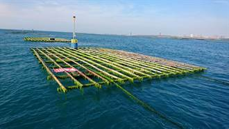 竹製蚵棚淘汰率高 台南年花2000多萬清理