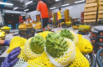 釋迦保險面積僅3.2% 農民觀望意願低